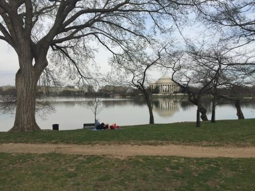 My favorite photo, looking across the tidal basin towards the Jefferson Memorial.