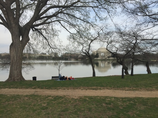 My favorite photo, looking across the tidal basin towards the Jefferson Memorial.